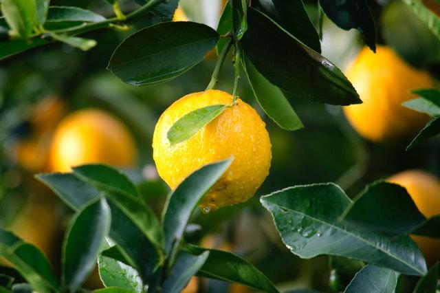 limoni sorbetto